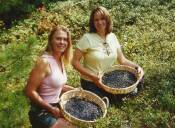 Picking Wild Blueberries with my best friend on her first time out.  I think it is great fun.  I eat blueberries in everything.  I flash freeze them on a cooking sheet and then put in the freezer in ziplock bags for long-lasting non-mushy berries for 100s of dishes.  I especially like wild berry smoothies with plain fat-free yogurt and honey as a sweetener along with some crush flax seed.